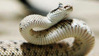 Feinde der schlangen