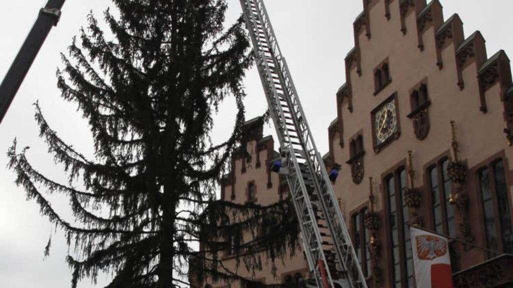 Weihnachtsbaum Frankfurt.Der Weihnachtsbaum Steht Frankfurt