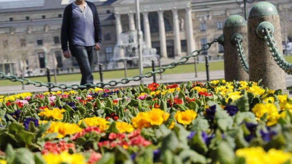 Stadt Pflanzt Tausend Blumen Wiesbaden