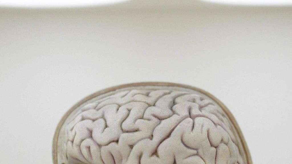 Ungereimtheiten Im Hirntod Konzept Gesundheit