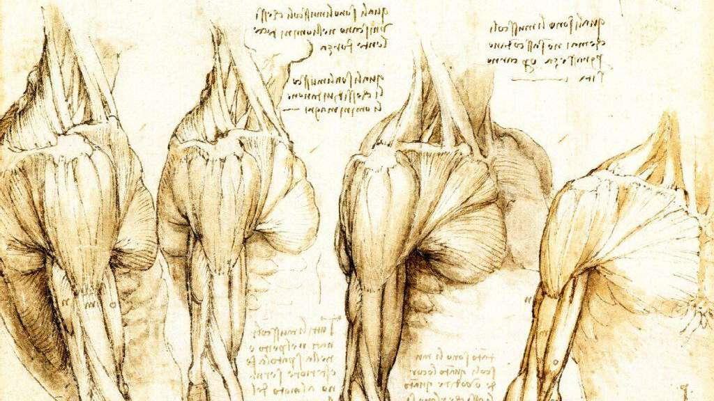 Da Vinci War Seiner Zeit Weit Voraus Wissen