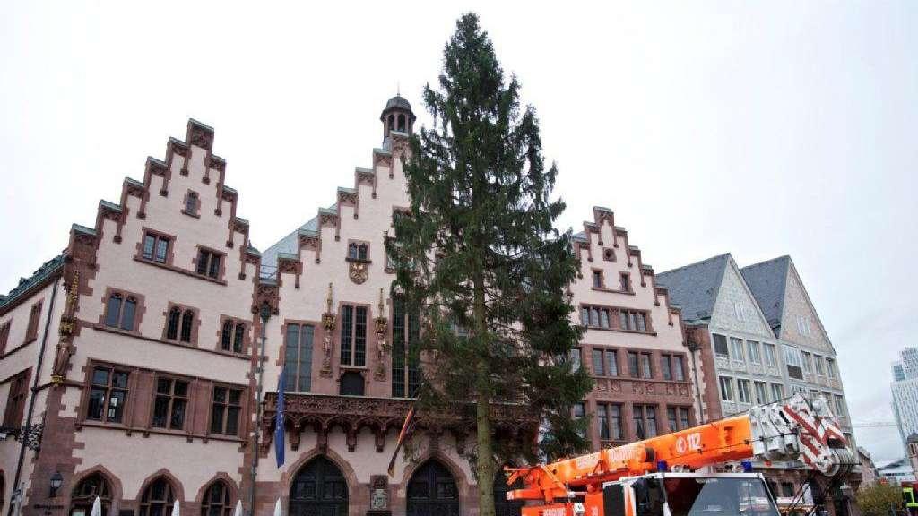 Weihnachtsbaum Frankfurt.Zittern Um Den Weihnachtsbaum Frankfurt