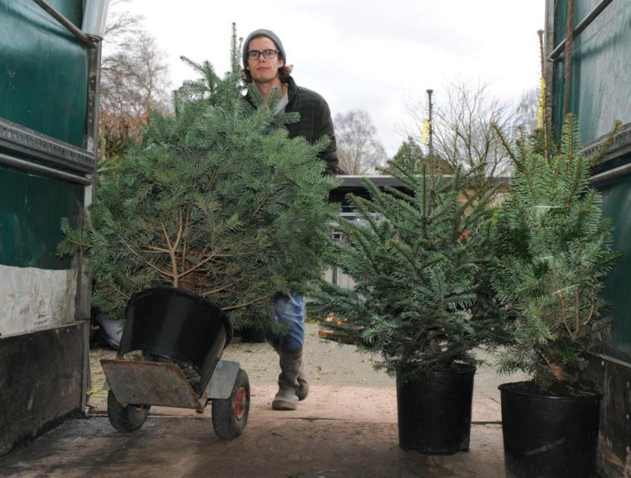 Weihnachtsbaum Im Topf Geschmückt.Ein Herz Für Weihnachtsbäume Mieten Statt Wegwerfen Ratgeber