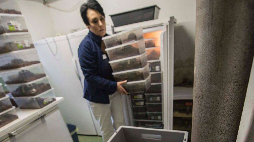 Kühlschrank Ins Auto Legen : Schildkröte im kühlschrank garten