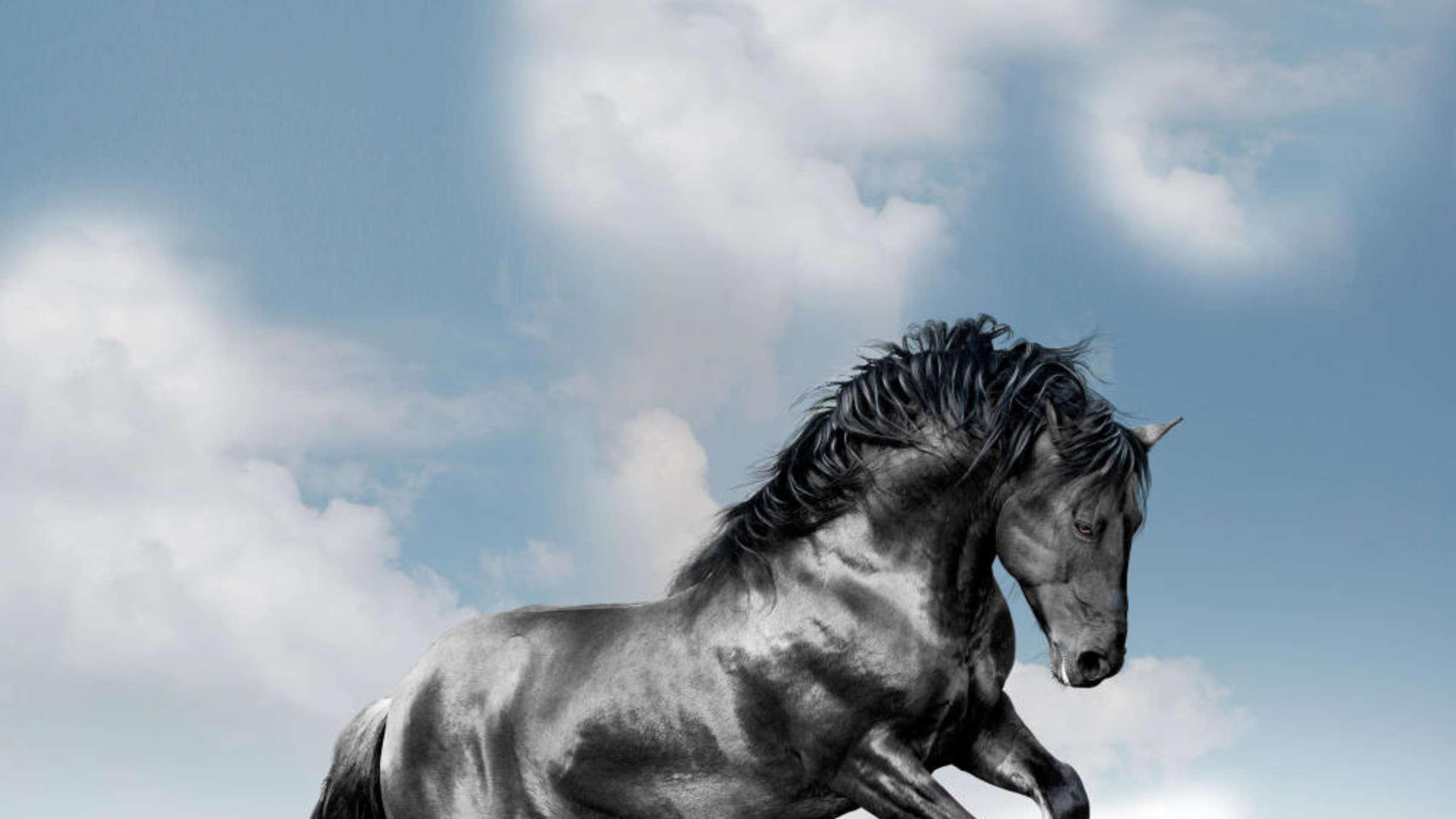 pferd und mensch sex