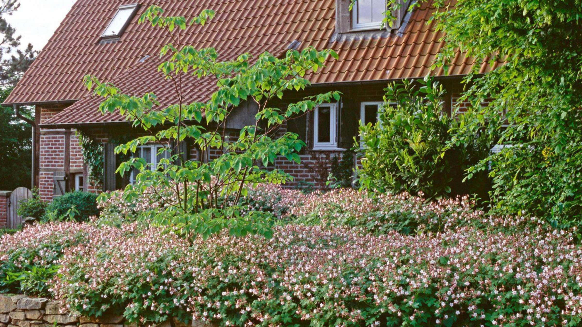 Sehr schnell zum grünen Garten: Gestalten mit Turbopflanzen  Wohnen Dekor