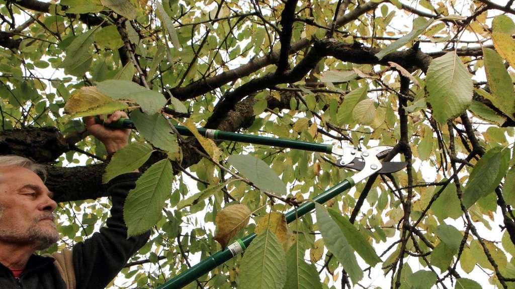 Obstbaume Schnitt Im Winter Oder Nach Der Ernte Wohnen