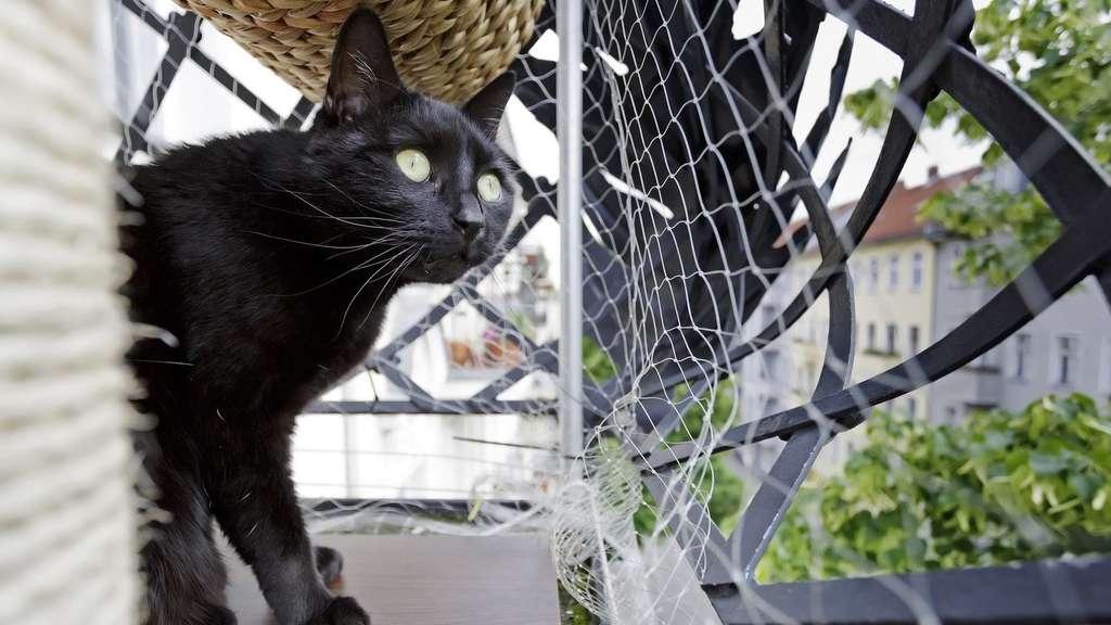 Katzen Nur Auf Gesicherten Balkon Raus Lassen Tiere