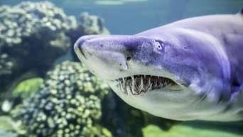sharks darmstadt