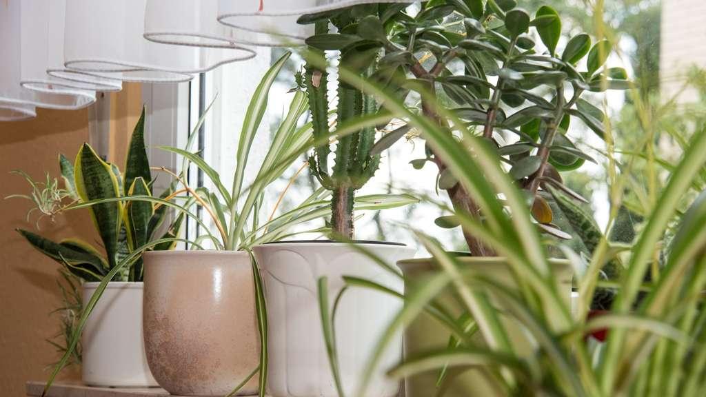 Wie Zimmerpflanzen Das Zuhause In Eine Grune Oase Verwandeln Wohnen