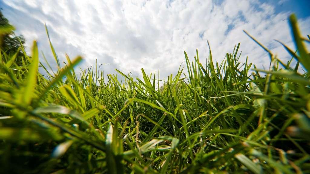 Hohes Gras Hilft Vögeln Und Igeln Wohnen