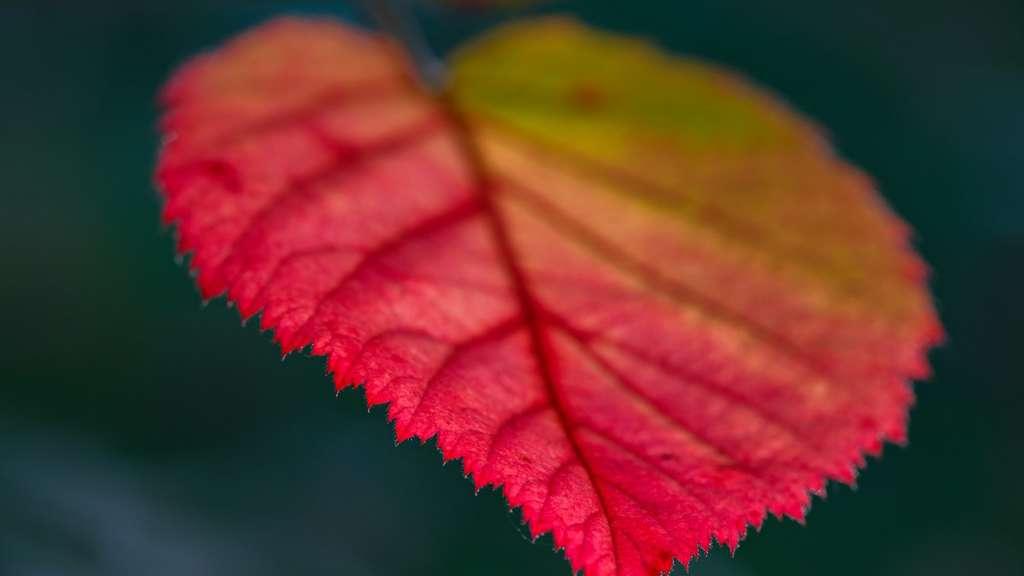 Warum Sich Laub Im Herbst Bunt Farbt Wohnen