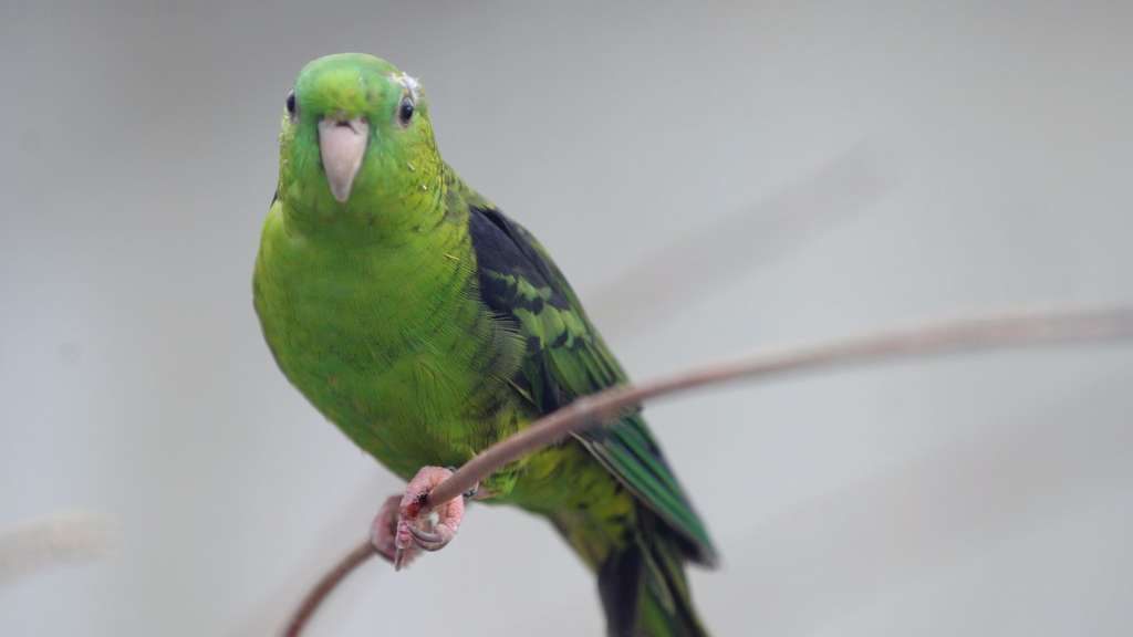 bilder von vögel  ausmalbilder und vorlagen