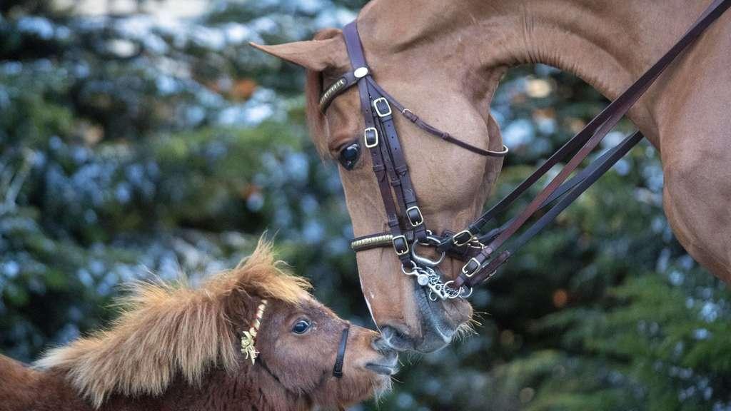Der Weihnachtsbaum.Der Weihnachtsbaum Als Futter Fürs Pferd Tiere