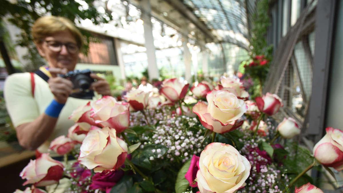 Frankfurt: Rosen- und Lichterfest im Palmengarten - Ein