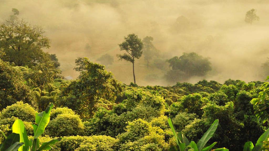 Das Artensterben geht schneller als gedacht