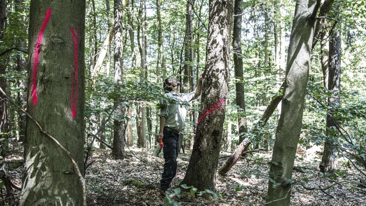 Wald in Hofheim wird erneuert | Hofheim - Frankfurter Rundschau