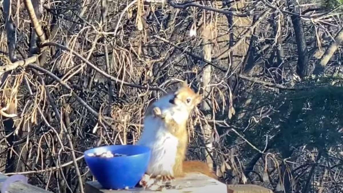 Eichhörnchen Video