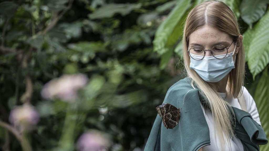 Angst vor Schmetterlingen sollten Gäste nicht haben.
